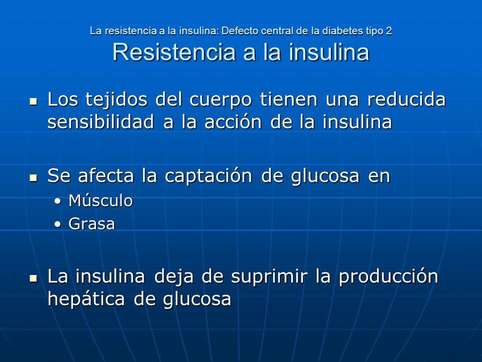 La resistencia a la insulina: Defecto central de la diabetes tipo 2 Resistencia a la insulina Los tejidos del cuerpo tienen una reducida sensibilidad