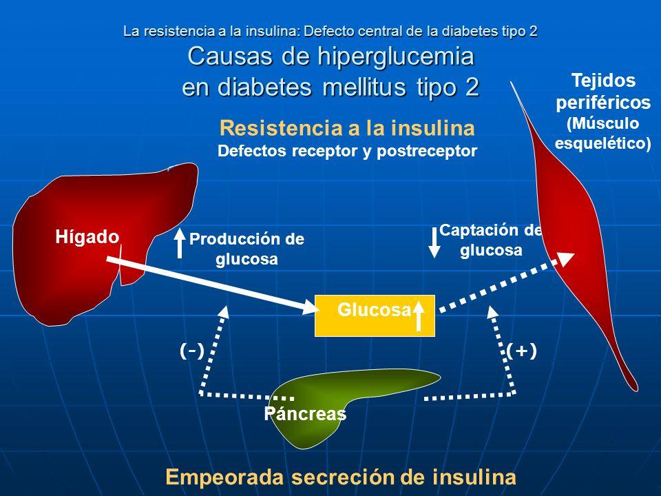 La resistencia a la insulina: Defecto central de la diabetes tipo 2 Causas de hiperglucemia en diabetes mellitus tipo 2 Resistencia a la insulina Defe