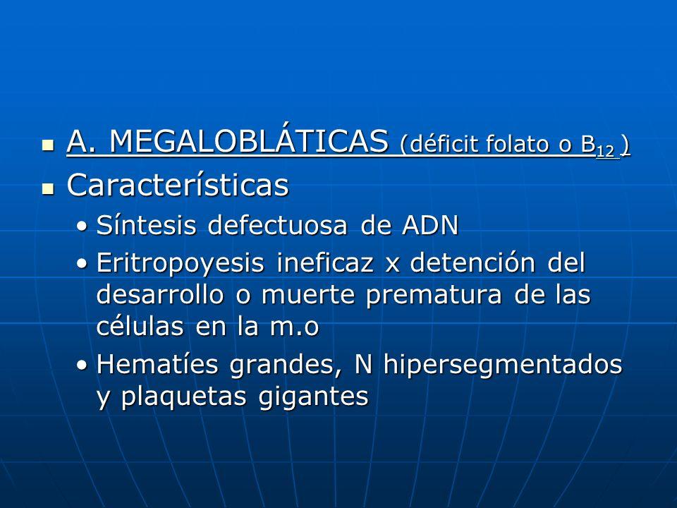 A. MEGALOBLÁTICAS (déficit folato o B 12 ) A. MEGALOBLÁTICAS (déficit folato o B 12 ) Características Características Síntesis defectuosa de ADNSíntes