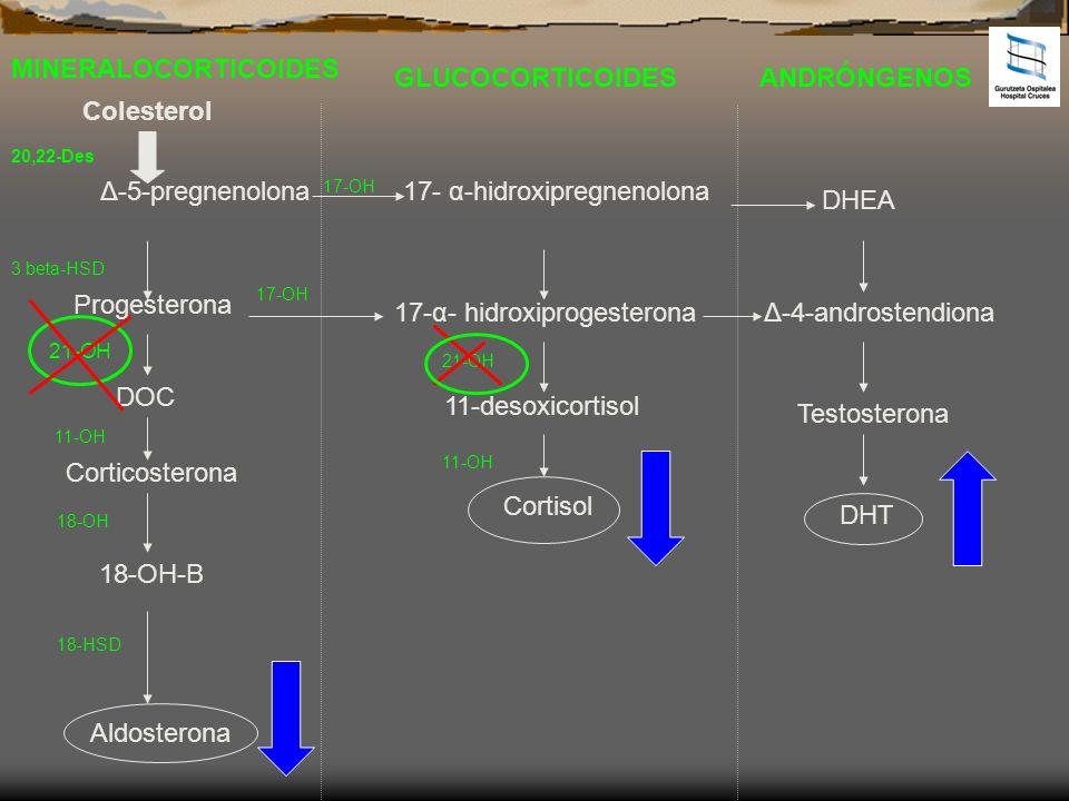 MINERALOCORTICOIDES GLUCOCORTICOIDESANDRÓNGENOS Colesterol Δ-5-pregnenolona Progesterona DOC Corticosterona 18-OH-B Aldosterona 17- α-hidroxipregnenol
