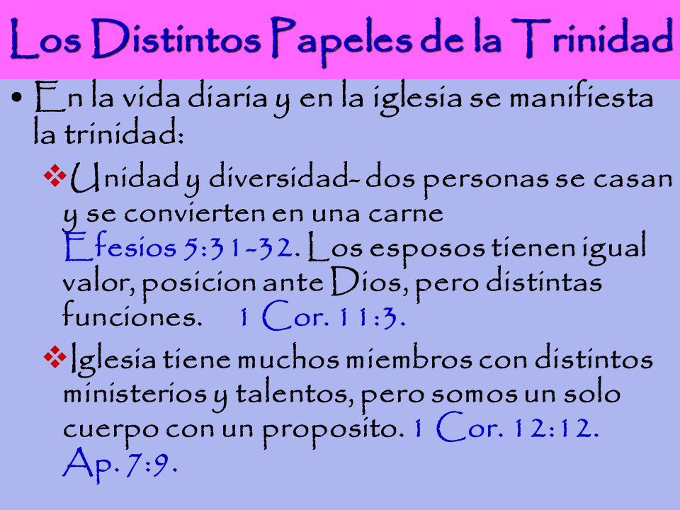 Los Distintos Papeles de la Trinidad En la vida diaria y en la iglesia se manifiesta la trinidad: Unidad y diversidad- dos personas se casan y se conv