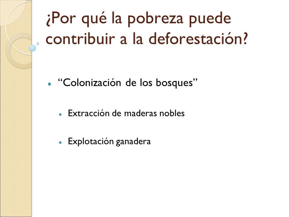 ¿Por qué la pobreza puede contribuir a la deforestación? Colonización de los bosques Extracción de maderas nobles Explotación ganadera
