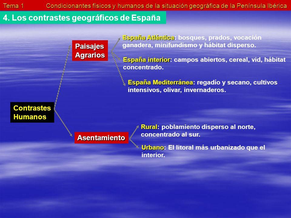 Tema 1 Condicionantes físicos y humanos de la situación geográfica de la Península Ibérica 4. Los contrastes geográficos de España Contrastes Humanos