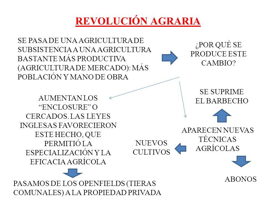 REVOLUCIÓN AGRARIA SE PASA DE UNA AGRICULTURA DE SUBSISTENCIA A UNA AGRICULTURA BASTANTE MÁS PRODUCTIVA (AGRICULTURA DE MERCADO): MÁS POBLACIÓN Y MANO