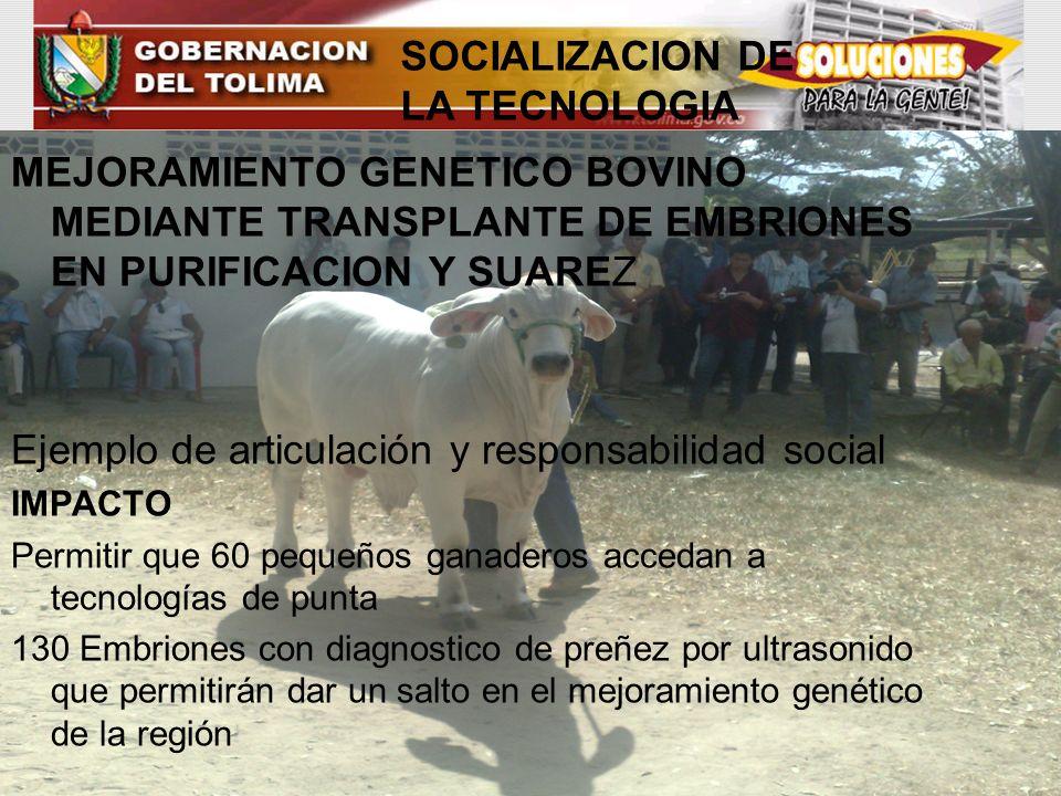 SOCIALIZACION DE LA TECNOLOGIA MEJORAMIENTO GENETICO BOVINO MEDIANTE TRANSPLANTE DE EMBRIONES EN PURIFICACION Y SUAREZ Ejemplo de articulación y respo