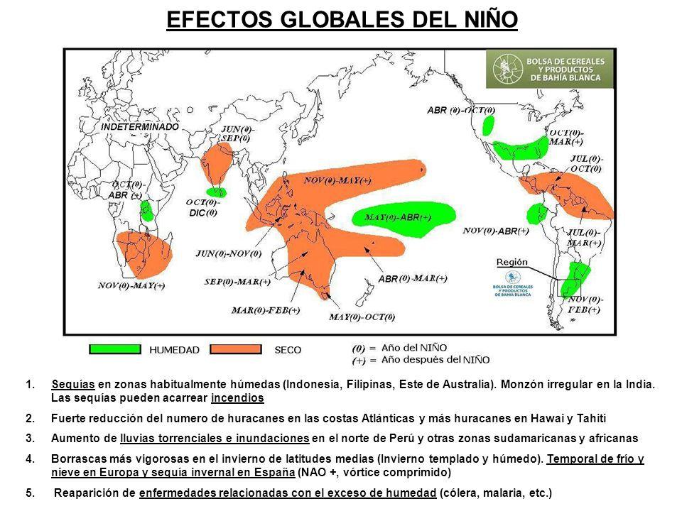 EFECTOS GLOBALES DEL NIÑO 1.Sequías en zonas habitualmente húmedas (Indonesia, Filipinas, Este de Australia). Monzón irregular en la India. Las sequía