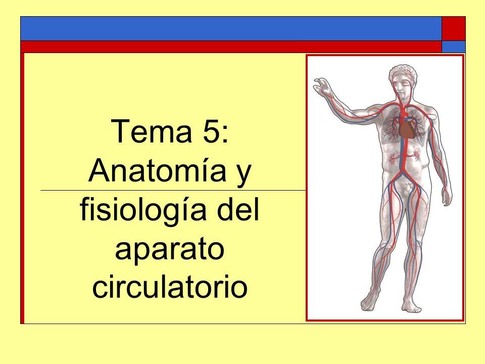 El aparato circulatorio Se encarga del transporte de sustancias por todo el organismo.