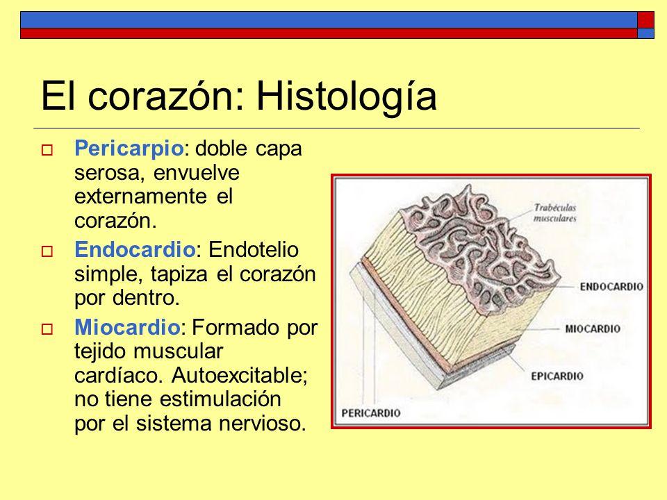 El corazón: Histología Pericarpio: doble capa serosa, envuelve externamente el corazón. Endocardio: Endotelio simple, tapiza el corazón por dentro. Mi