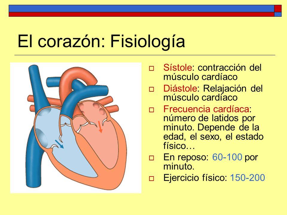 El corazón: Fisiología Sístole: contracción del músculo cardíaco Diástole: Relajación del músculo cardíaco Frecuencia cardíaca: número de latidos por