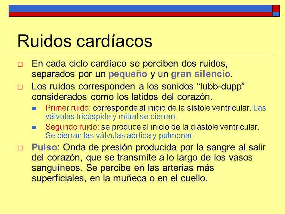 Ruidos cardíacos En cada ciclo cardíaco se perciben dos ruidos, separados por un pequeño y un gran silencio. Los ruidos corresponden a los sonidos lub