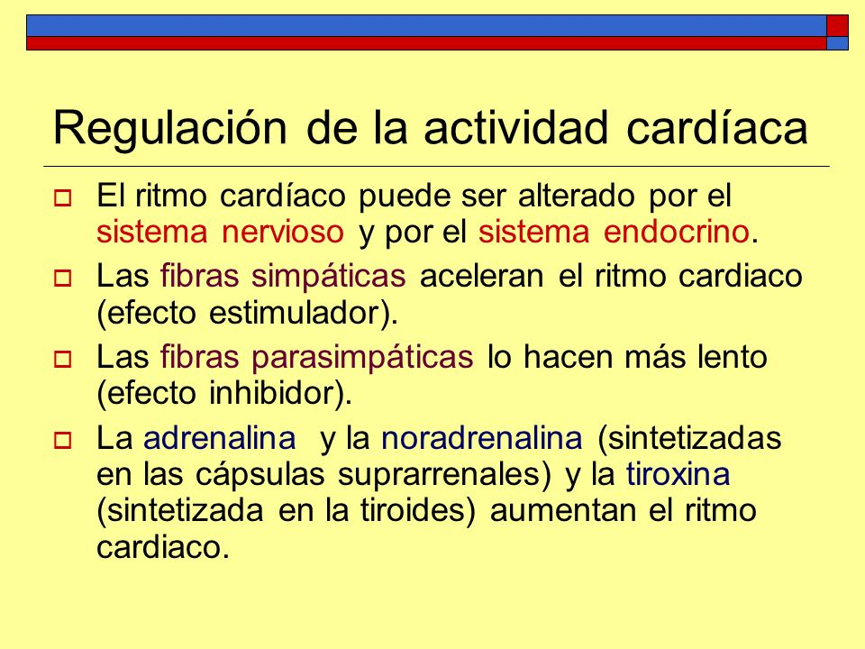 El ritmo cardíaco puede ser alterado por el sistema nervioso y por el sistema endocrino. Las fibras simpáticas aceleran el ritmo cardiaco (efecto esti