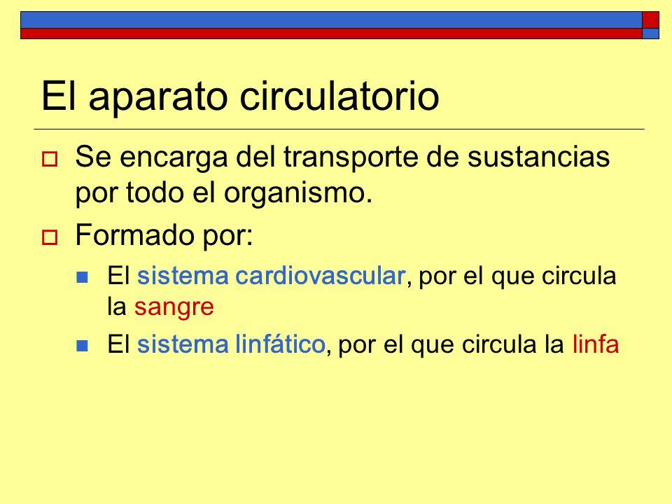 El aparato circulatorio Se encarga del transporte de sustancias por todo el organismo. Formado por: El sistema cardiovascular, por el que circula la s