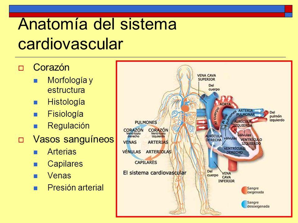 Anatomía del sistema cardiovascular Corazón Morfología y estructura Histología Fisiología Regulación Vasos sanguíneos Arterias Capilares Venas Presión