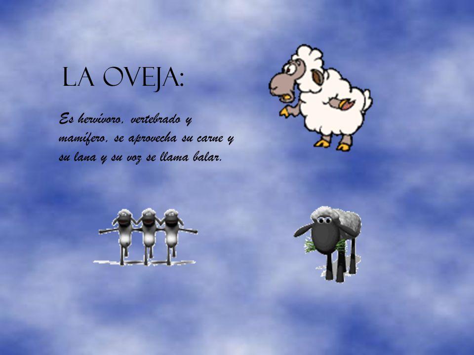 LA OVEJA: Es hervívoro, vertebrado y mamífero, se aprovecha su carne y su lana y su voz se llama balar.
