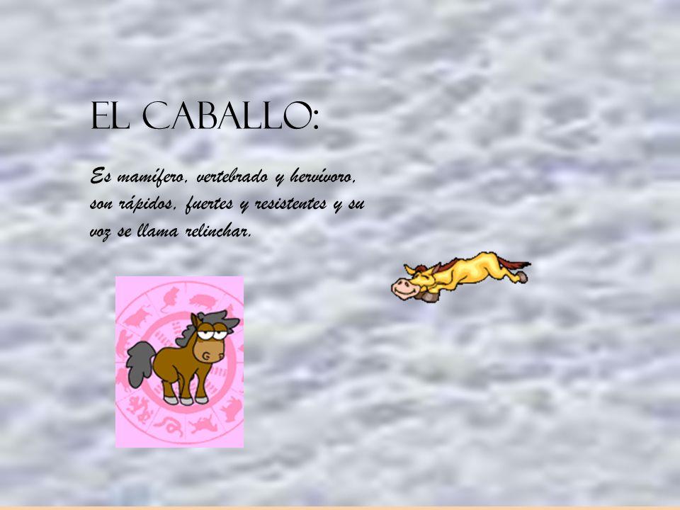 EL CABALLO: Es mamífero, vertebrado y hervívoro, son rápidos, fuertes y resistentes y su voz se llama relinchar.