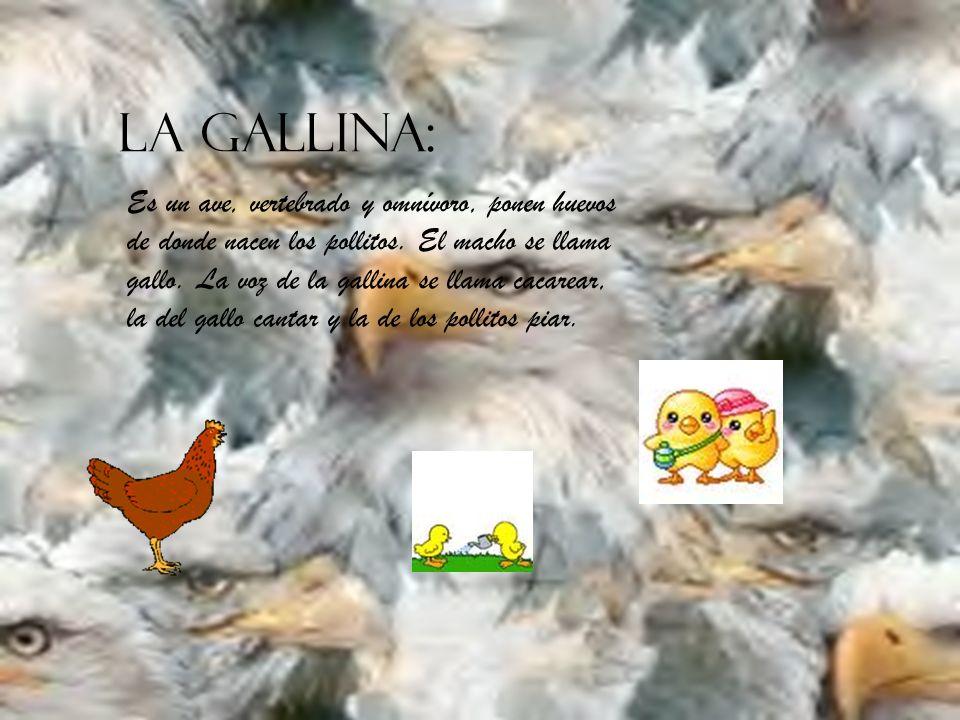 LA GALLINA: Es un ave, vertebrado y omnívoro, ponen huevos de donde nacen los pollitos.