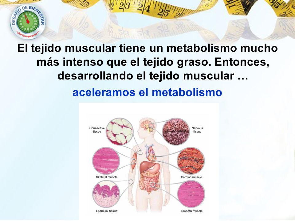 El tejido muscular tiene un metabolismo mucho más intenso que el tejido graso. Entonces, desarrollando el tejido muscular … aceleramos el metabolismo