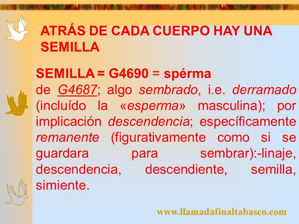 www.llamadafinaltabasco.com ATRÁS DE CADA CUERPO HAY UNA SEMILLA SEMILLA = G4690 = spérma de G4687; algo sembrado, i.e. derramado (incluído la «esperm