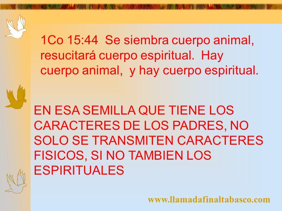 1Co 15:44 Se siembra cuerpo animal, resucitará cuerpo espiritual. Hay cuerpo animal, y hay cuerpo espiritual. EN ESA SEMILLA QUE TIENE LOS CARACTERES
