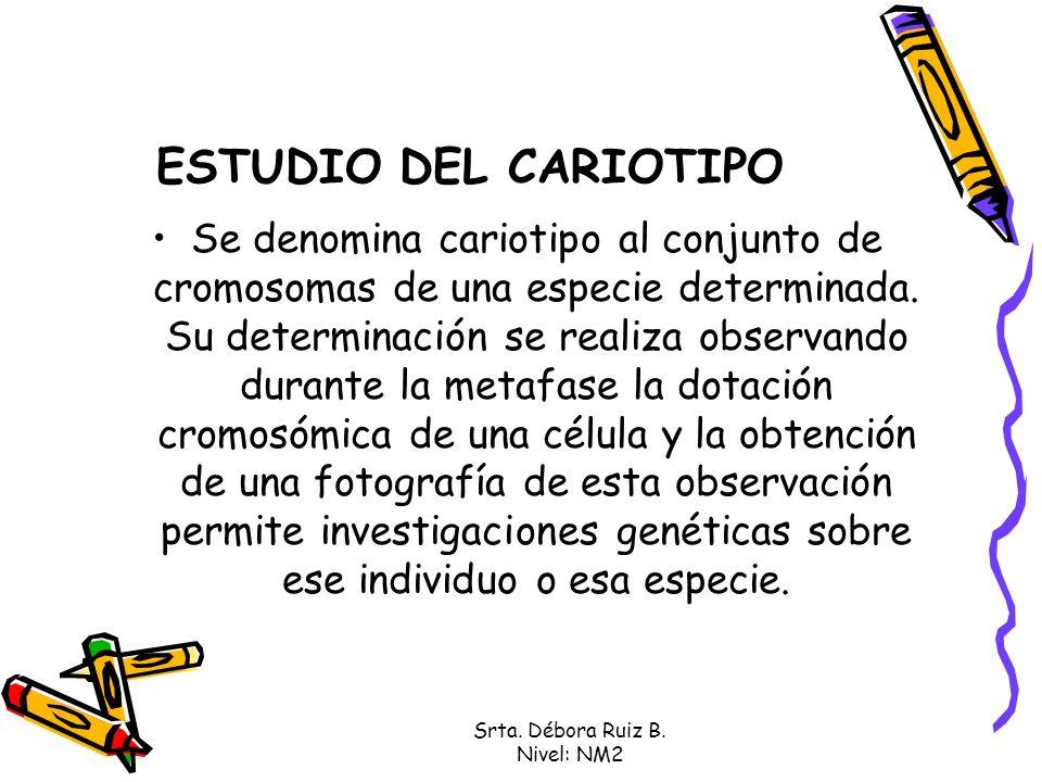 Srta. Débora Ruiz B. Nivel: NM2 ESTUDIO DEL CARIOTIPO Se denomina cariotipo al conjunto de cromosomas de una especie determinada. Su determinación se