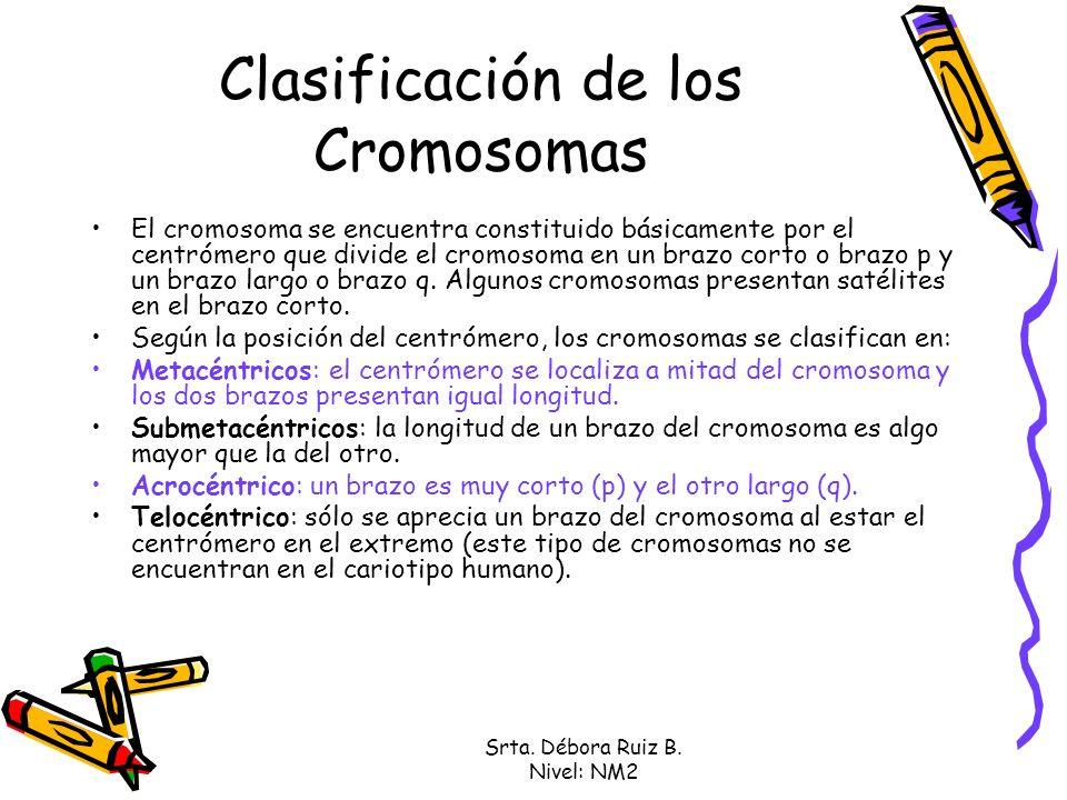 Clasificación de los Cromosomas El cromosoma se encuentra constituido básicamente por el centrómero que divide el cromosoma en un brazo corto o brazo