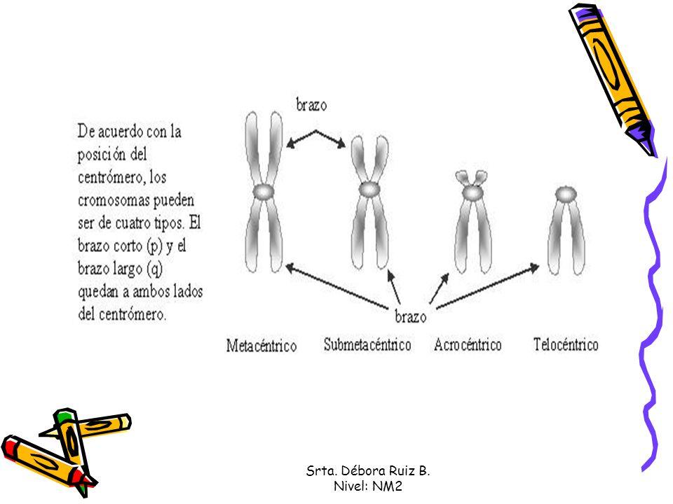 Idiograma Un idiograma es la representación esquemática del tamaño, forma y patrón de bandas de todo el complemento cromosómico, los cromosomas se sitúan alineados por el centrómero, y con el brazo largo siempre hacia abajo.