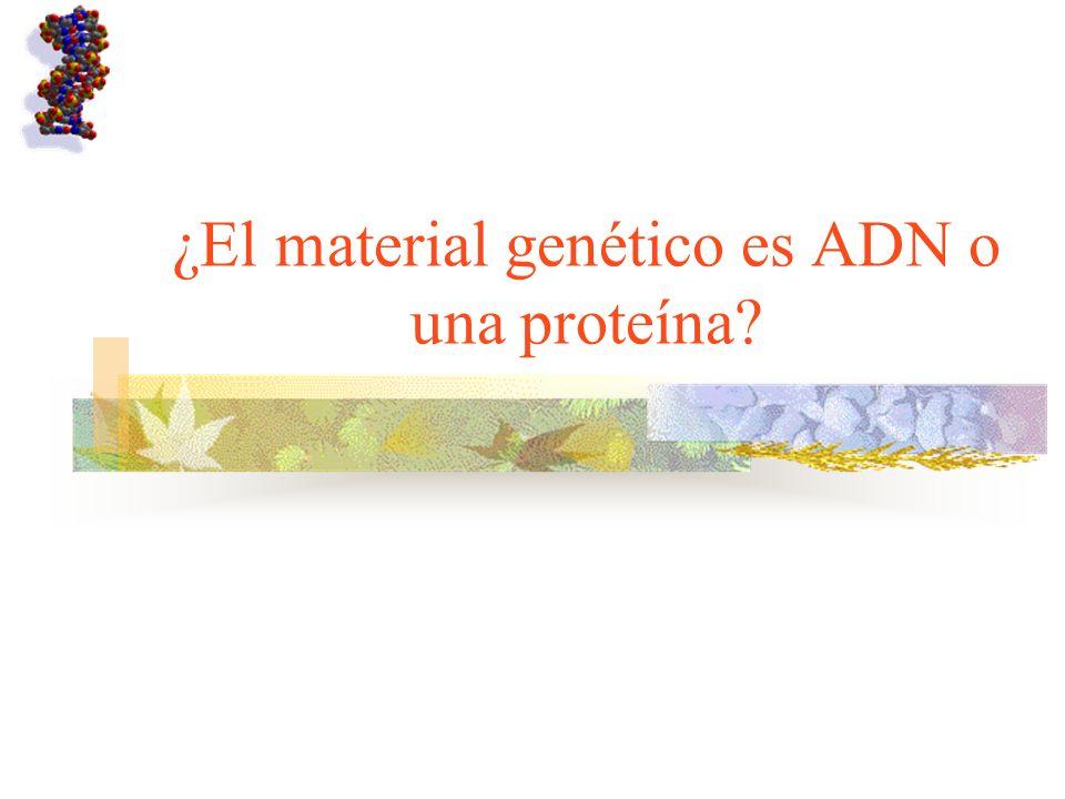 ¿El material genético es ADN o una proteína?