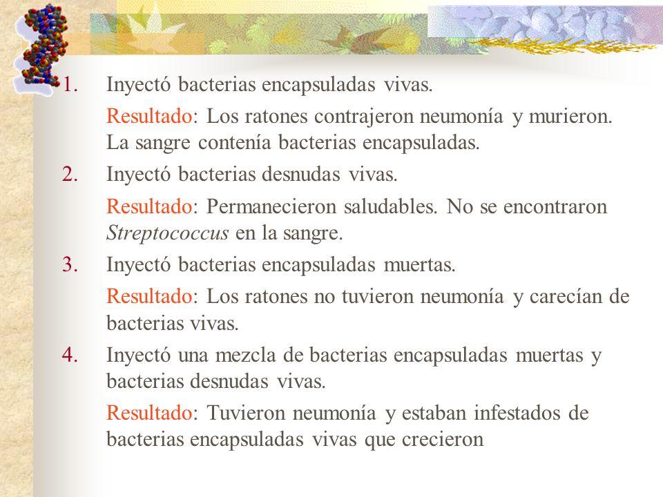 1.Inyectó bacterias encapsuladas vivas. Resultado: Los ratones contrajeron neumonía y murieron. La sangre contenía bacterias encapsuladas. 2.Inyectó b