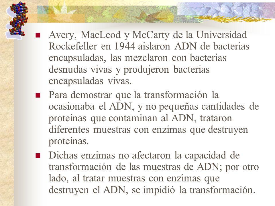 Avery, MacLeod y McCarty de la Universidad Rockefeller en 1944 aislaron ADN de bacterias encapsuladas, las mezclaron con bacterias desnudas vivas y pr