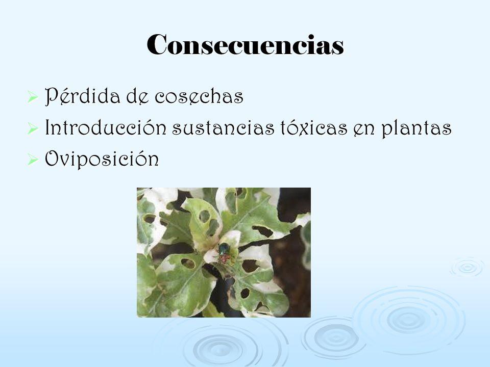 Consecuencias Pérdida de cosechas Introducción sustancias tóxicas en plantas Oviposición