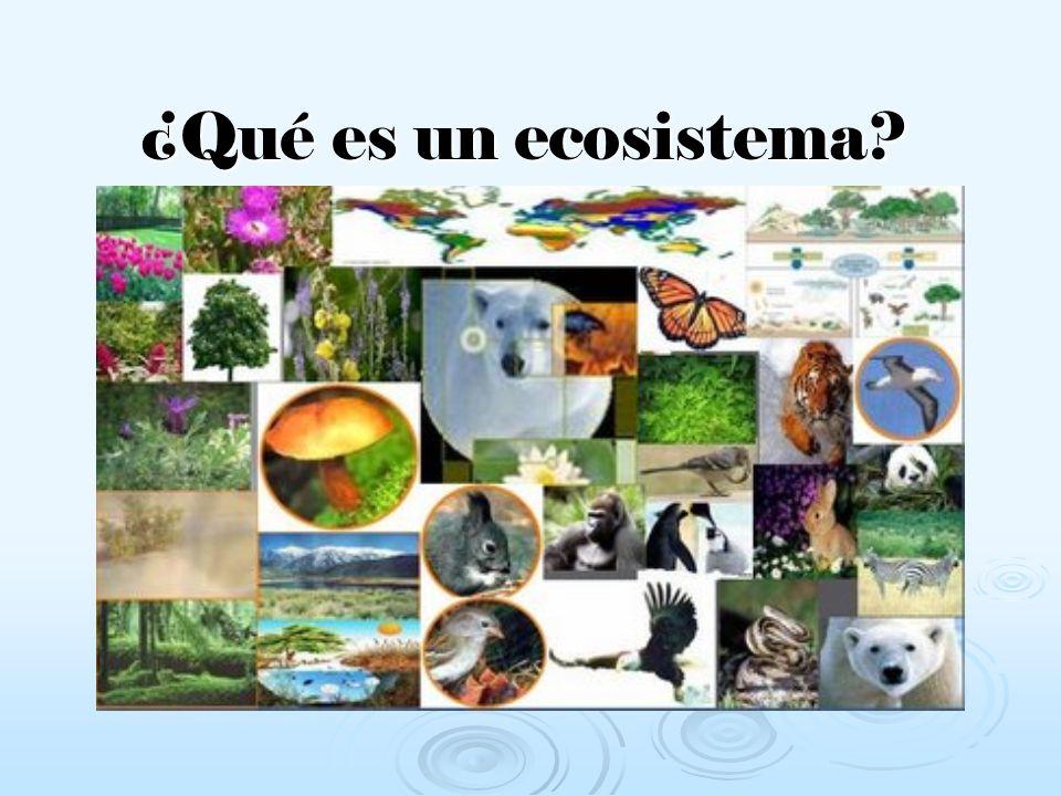 ¿Cuándo están en equilibrio los ecosistemas.