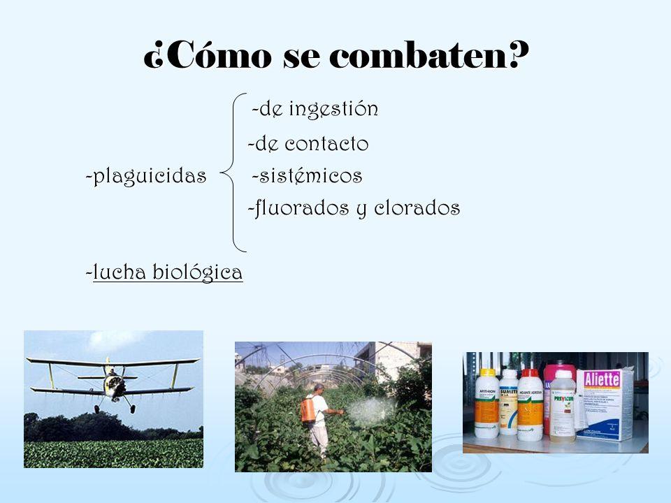 ¿Cómo se combaten? -de ingestión -de ingestión -de contacto -de contacto -plaguicidas -sistémicos -plaguicidas -sistémicos -fluorados y clorados -fluo