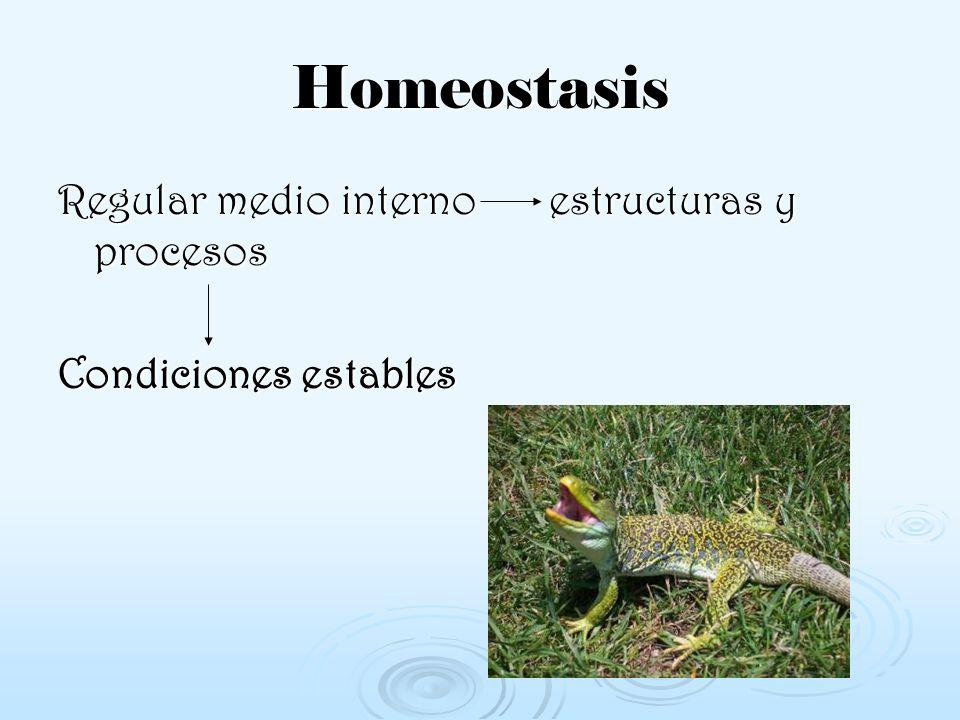Homeostasis Regular medio interno estructuras y procesos Condiciones estables