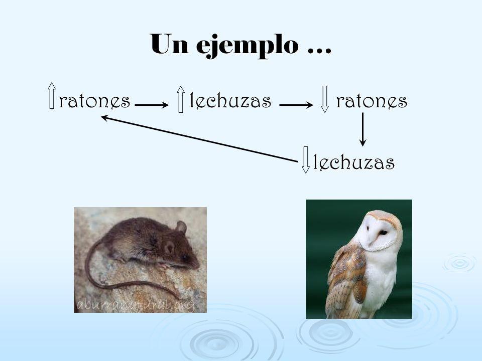 ratones lechuzas ratones ratones lechuzas ratones lechuzas lechuzas