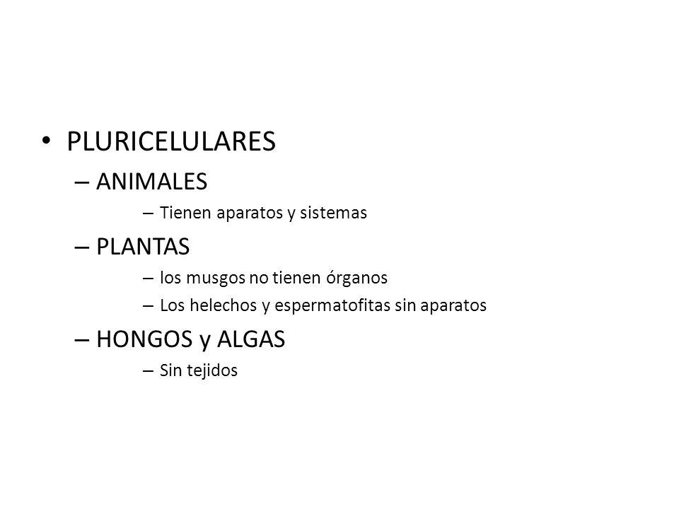 PLURICELULARES – ANIMALES – Tienen aparatos y sistemas – PLANTAS – los musgos no tienen órganos – Los helechos y espermatofitas sin aparatos – HONGOS