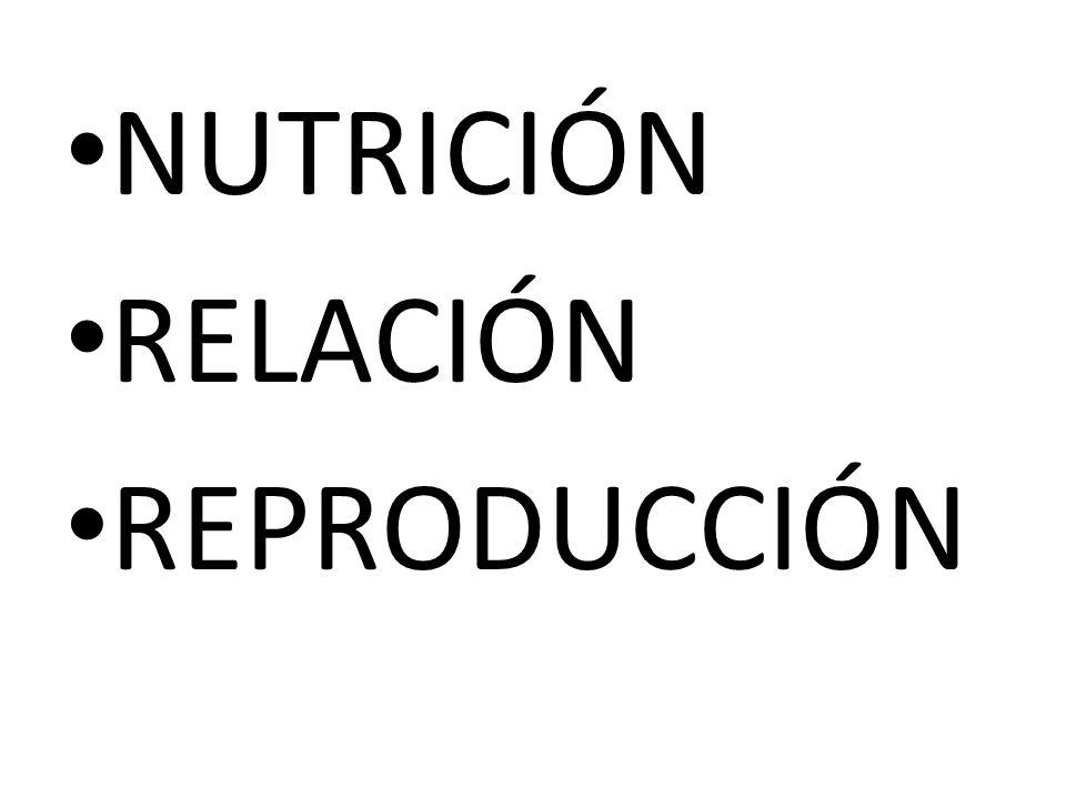 NUTRICIÓN RELACIÓN REPRODUCCIÓN