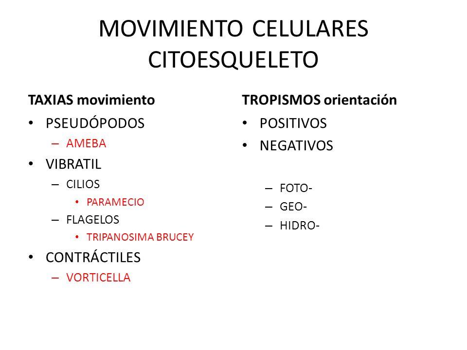 REPRODUCCIÓN de una célula madre dos o más células idénticas BIPARTICIÓN GEMACIÓN ESPORULACIÓN