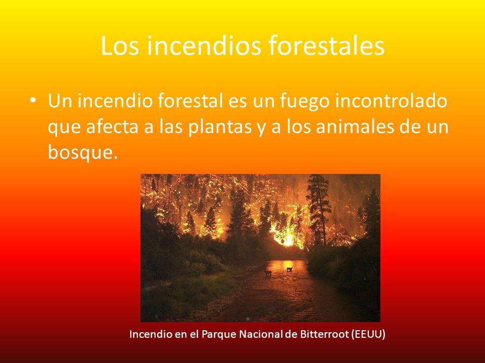 Los incendios forestales Un incendio forestal es un fuego incontrolado que afecta a las plantas y a los animales de un bosque. Incendio en el Parque N