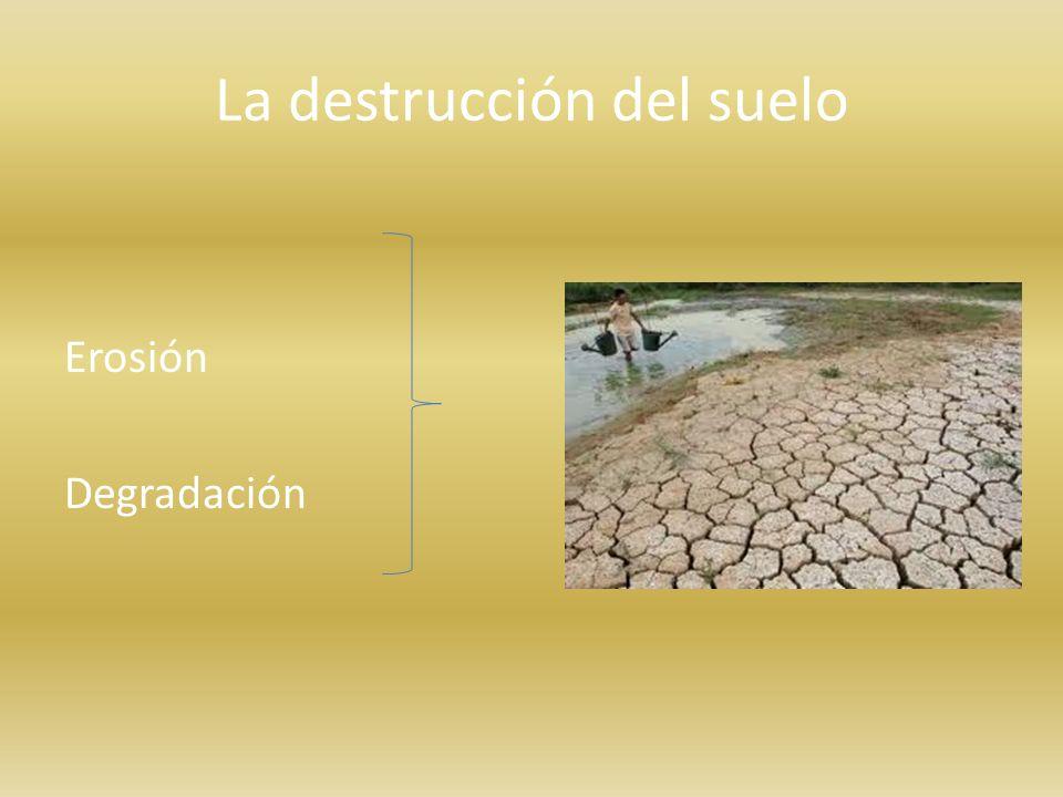 La destrucción del suelo Erosión Degradación