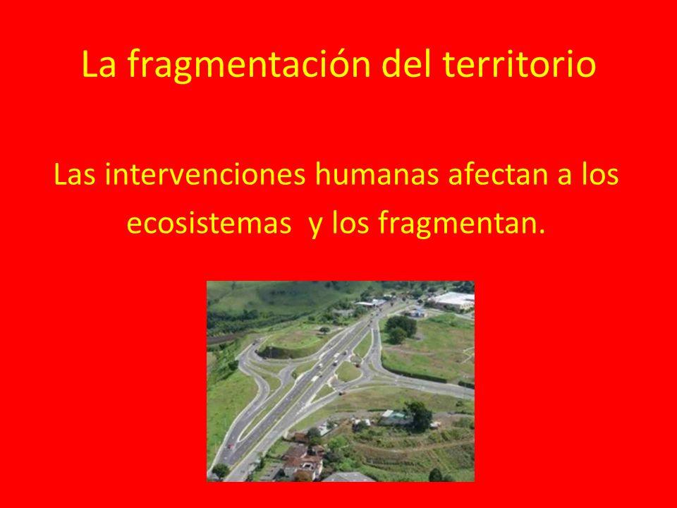 La fragmentación del territorio Las intervenciones humanas afectan a los ecosistemas y los fragmentan.