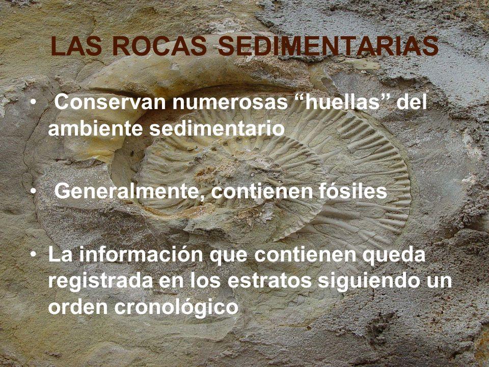 Tipos de fósiles: guía Aquellos utilizados para definir e identificar periodos geológicos.