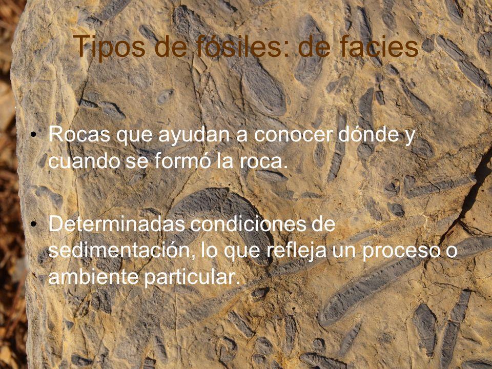 LEYES DE LA ESTRATIGRAFÍA Ley de la Horizontalidad Original