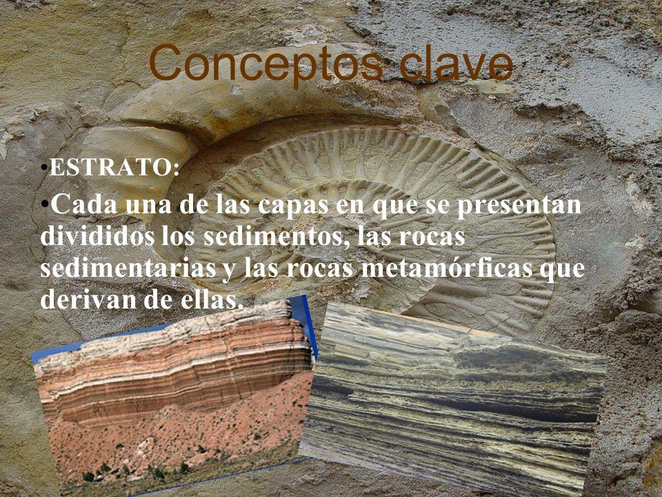 Conceptos clave SERIE ESTRATIGRÁFICA: Sucesión de estratos con continuidad en el tiempo y separada de otras series por una discontinuidad estratigráfica.