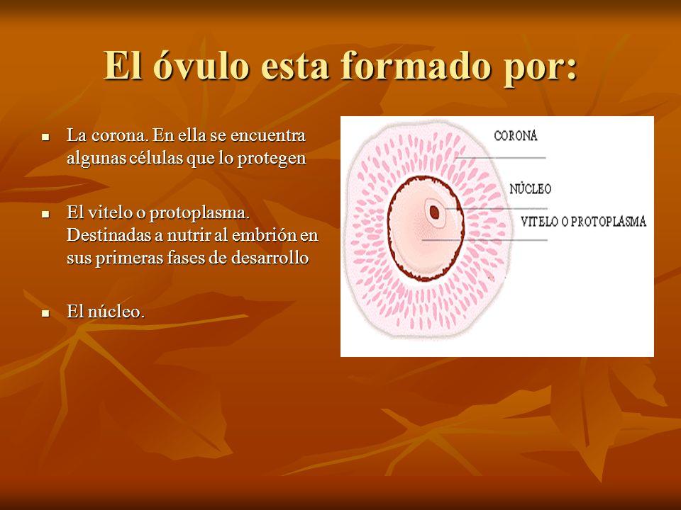 Esperamos que os haya servido de algo nuestra exposición Alberto Garrido Montañés Alberto Garrido Montañés Ana Sánchez Fortis Ana Sánchez Fortis