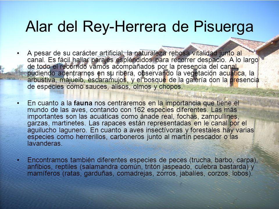 Alar del Rey-Herrera de Pisuerga A pesar de su carácter artificial, la naturaleza rebosa vitalidad junto al canal. Es fácil hallar parajes espléndidos