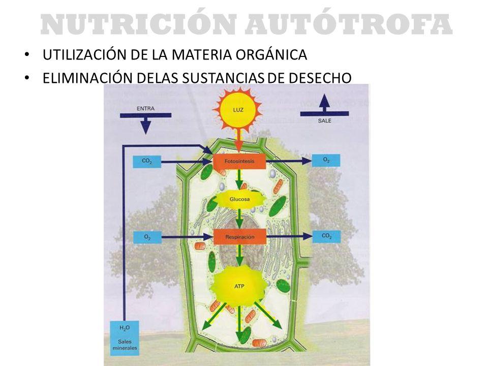 NUTRICIÓN AUTÓTROFA UTILIZACIÓN DE LA MATERIA ORGÁNICA ELIMINACIÓN DELAS SUSTANCIAS DE DESECHO