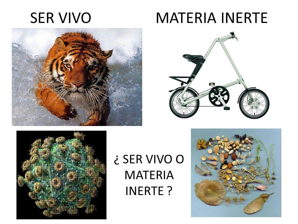 SER VIVO MATERIA INERTE ¿ SER VIVO O MATERIA INERTE ?