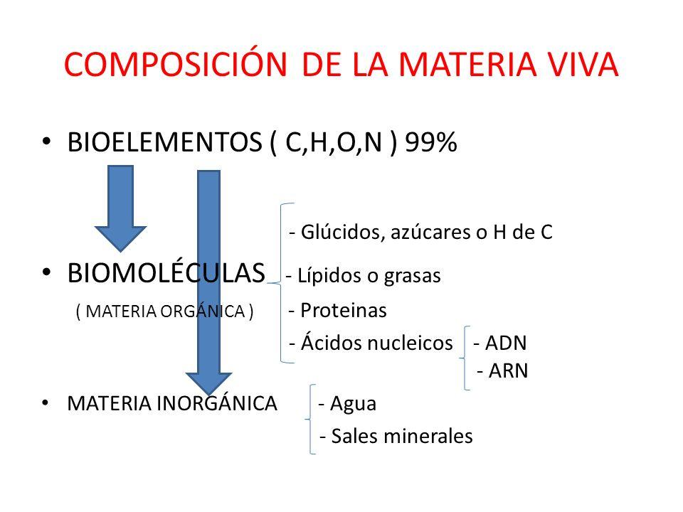 COMPOSICIÓN DE LA MATERIA VIVA BIOELEMENTOS ( C,H,O,N ) 99% - Glúcidos, azúcares o H de C BIOMOLÉCULAS - Lípidos o grasas ( MATERIA ORGÁNICA ) - Proteinas - Ácidos nucleicos - ADN - ARN MATERIA INORGÁNICA - Agua - Sales minerales