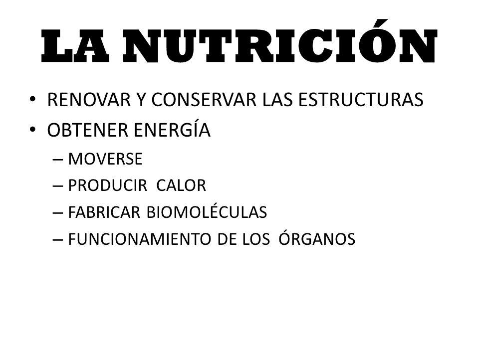LA NUTRICIÓN RENOVAR Y CONSERVAR LAS ESTRUCTURAS OBTENER ENERGÍA – MOVERSE – PRODUCIR CALOR – FABRICAR BIOMOLÉCULAS – FUNCIONAMIENTO DE LOS ÓRGANOS