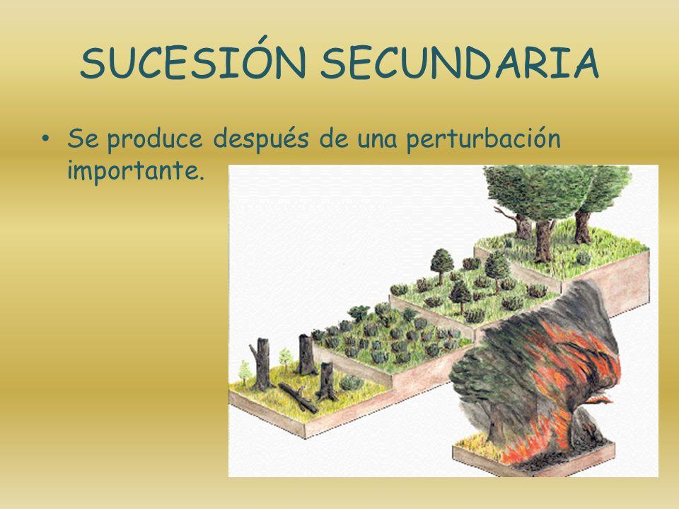 DESERTIFICACIÓN La desertificación es un proceso de degradación ecológica en el que el suelo fértil y productivo pierde total o parcialmente el potencial de producción.